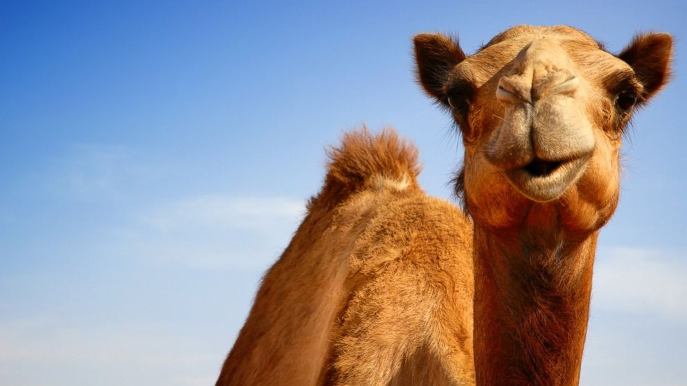 Sound Off for July 28: Would you buy products made from camel milk?