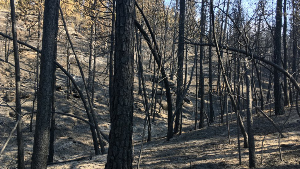Camp Sekaniback open after Upriver Beacon Fire burns 42 acres of park