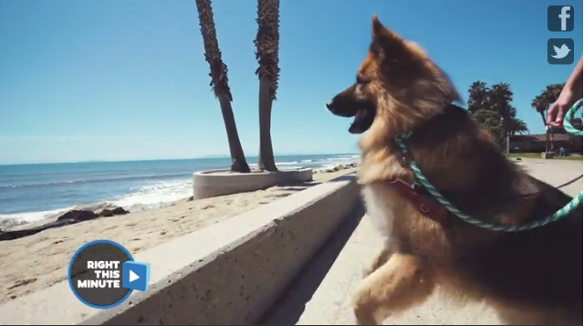 This dog has an adorable reaction to seeing the ocean for the first time
