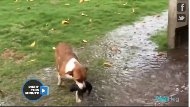 Momma dog rescues her pups from the rain