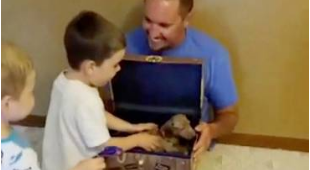 Treasure map leads brothers to their new puppy