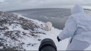 Brave photographer stands up to Polar bear