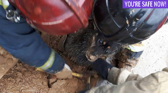 Stray puppy rescued from sticky mud