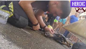 Firefighters successfully revive dog after apartment fire