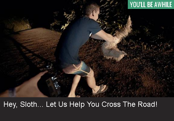 Hey, Sloth – let us help you cross the road!