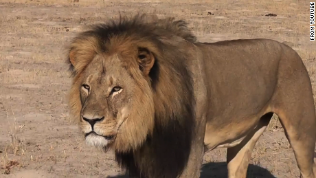 Sound Off for July 29: Is this type of trophy hunting OK as long as it's legal?