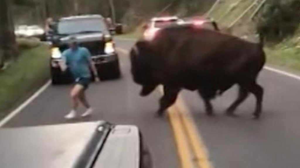 Man who harassed bison in Yellowstone sentenced to 130 days in jail