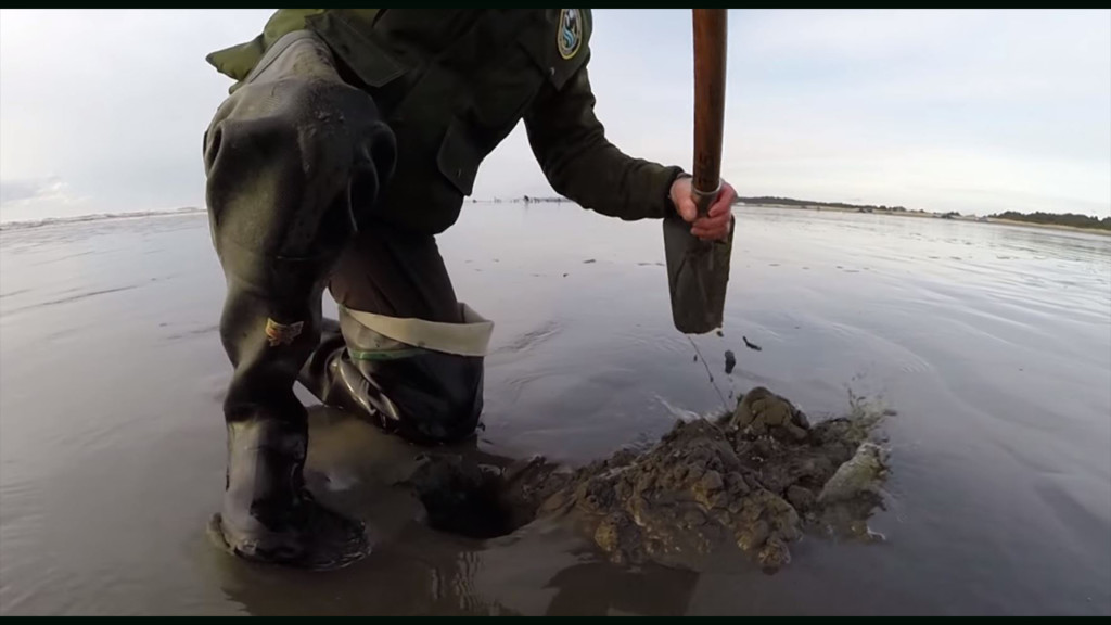 8 days of razor clam digging in March, April