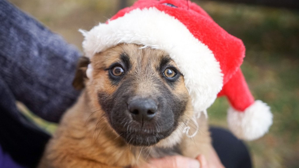 Take your furry friend to the General Store to get their photo with 'Santa Paws'