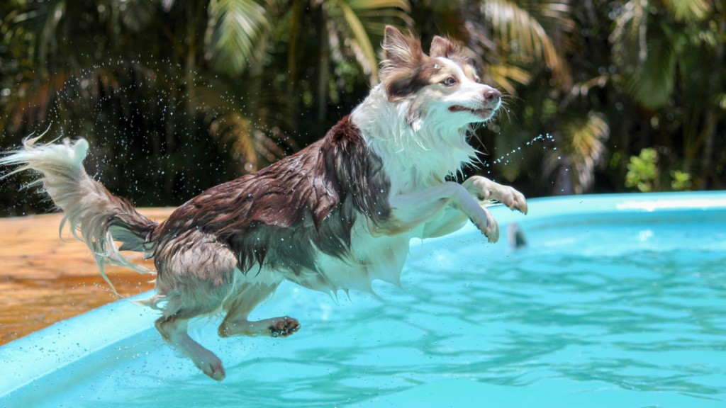 Take your pup for a swim at local pools