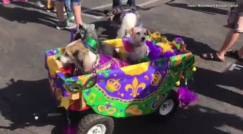 Pups march down Bour-bone street to celebrate Doggie Gras
