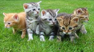 Here kitty, kitty: It's national cat day
