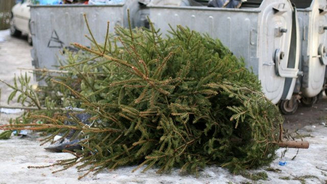 City of Spokane offering free curbside tree pickup after the holidays