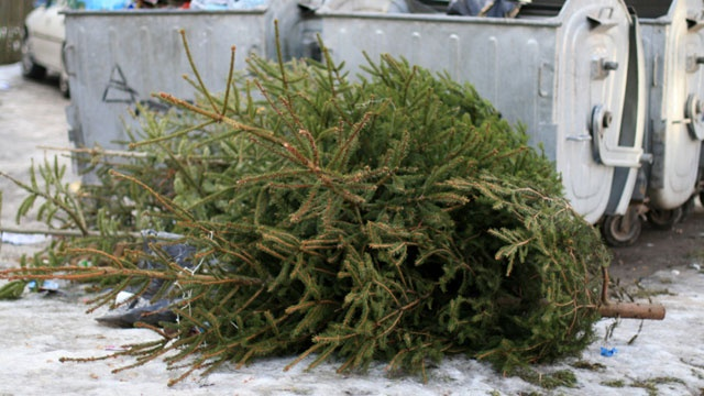 Local Boy Scout troop will recycle your Christmas tree for you