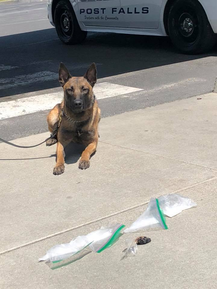 Post Falls PD K9's keeping busy