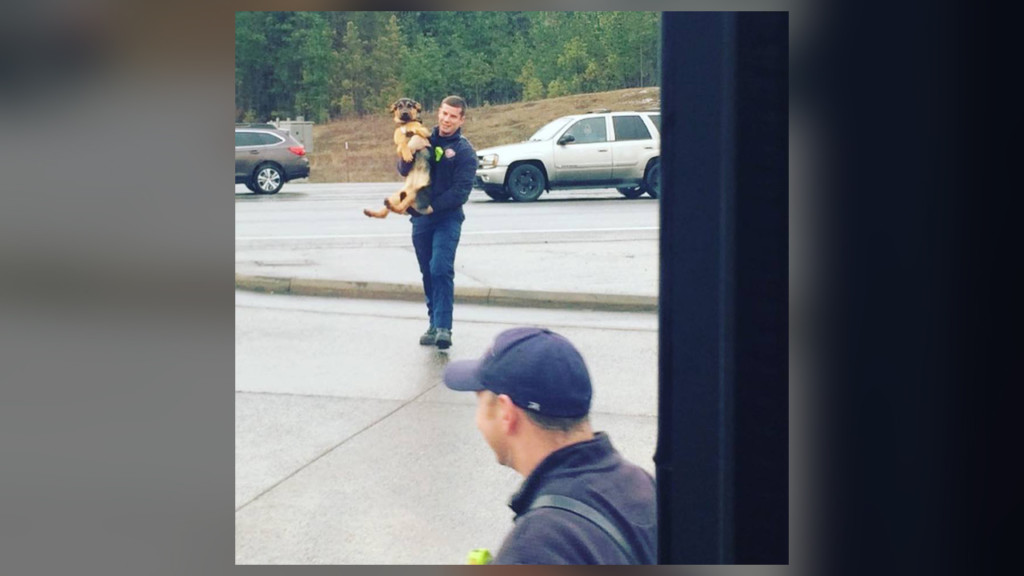 Firefighters help dog that jumped out of van onto highway