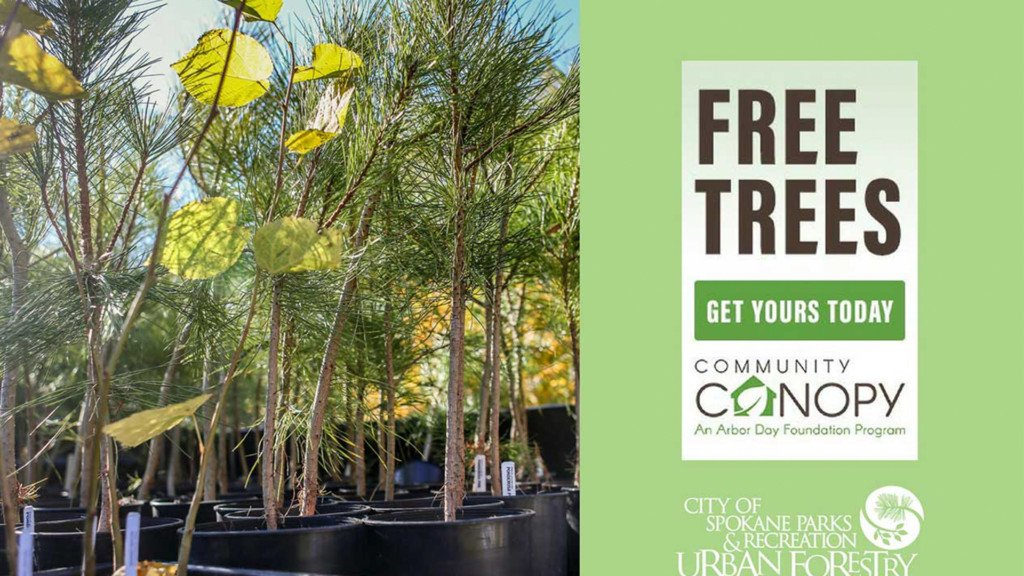 Spokane Neighborhood Tree Program giving away 1,000 free trees
