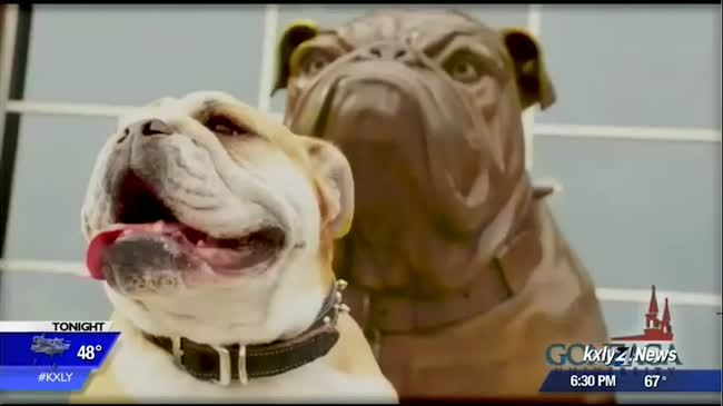Owner of late bulldog Maddie suing Gonzaga for discrimination