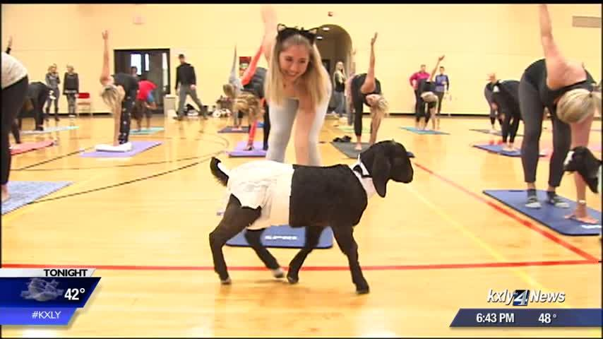 Halloween-themed Goat Yoga class fundraiser for at-risk local children