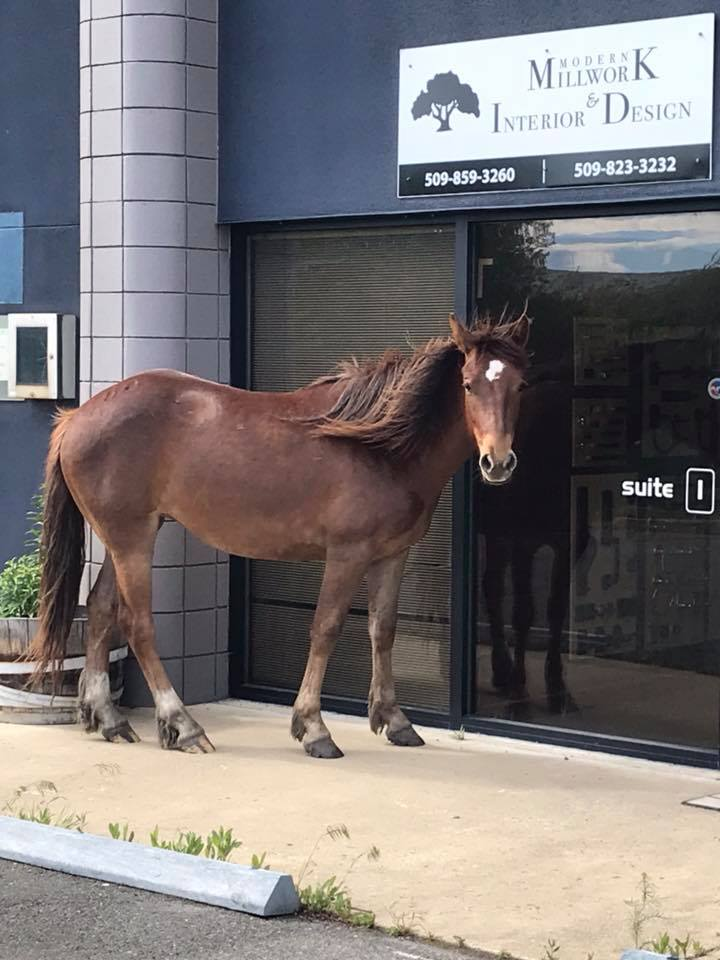 Someone's pet got out and did a little 'horsing around' in Ellensburg