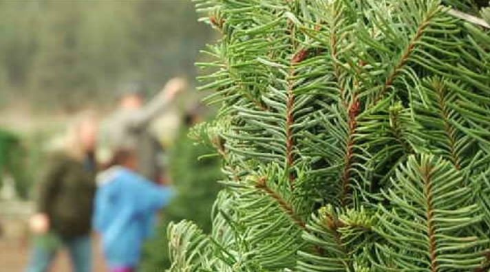 Christmas trees for a cause: how to buy your tree and donate to a local children's home