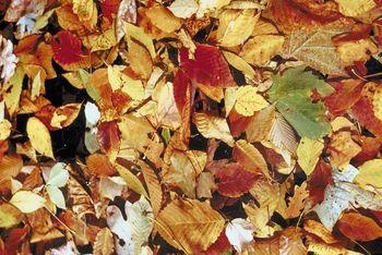 City crews begin leaf pickup