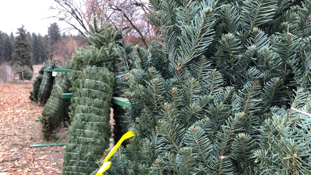 Hutton Settlement holds annual Christmas tree farm fundraiser