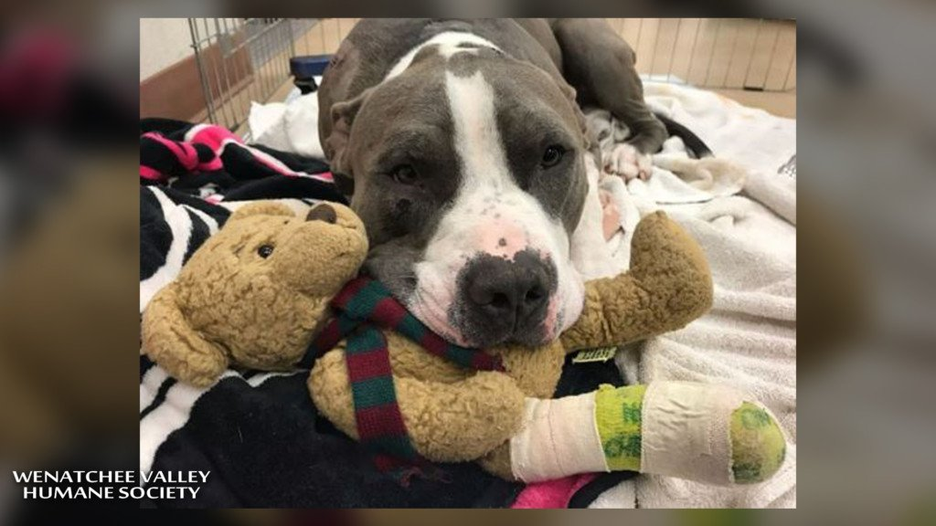 2 out 1 to go, surgery successful for dog shot in the head