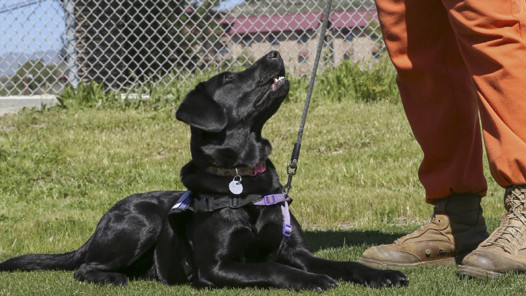 Both inmates and dogs thrive in the Pawsitive Dog Prison Training Program