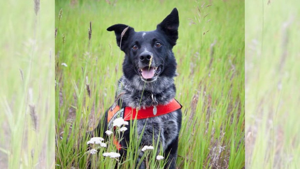 Kootenai County says goodbye to beloved K9