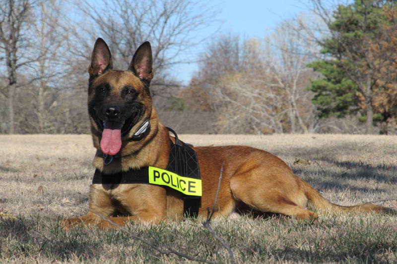 Moses Lake Police using crowd sourcing to fund new K9 program