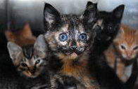 Foster parents for kittens needed right MEOW