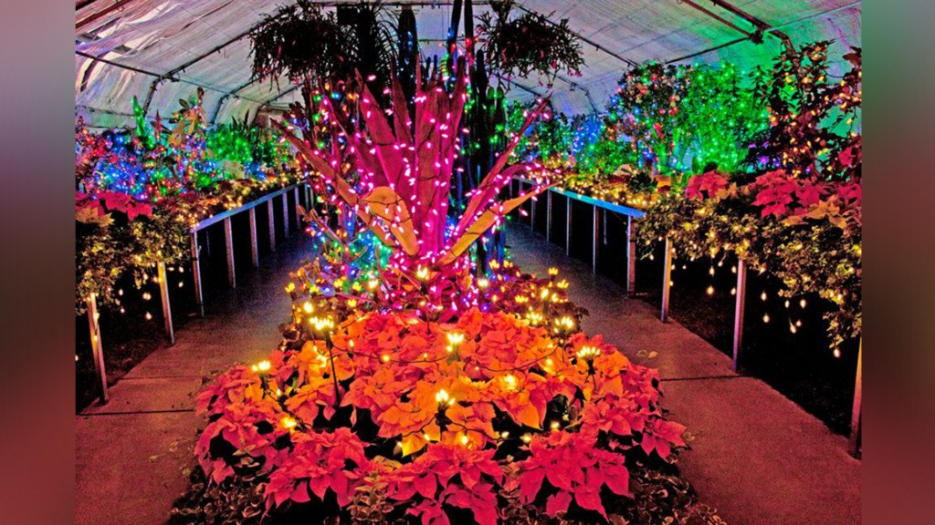 Manito Park's Gaiser Conservatory is a winter wonderland!