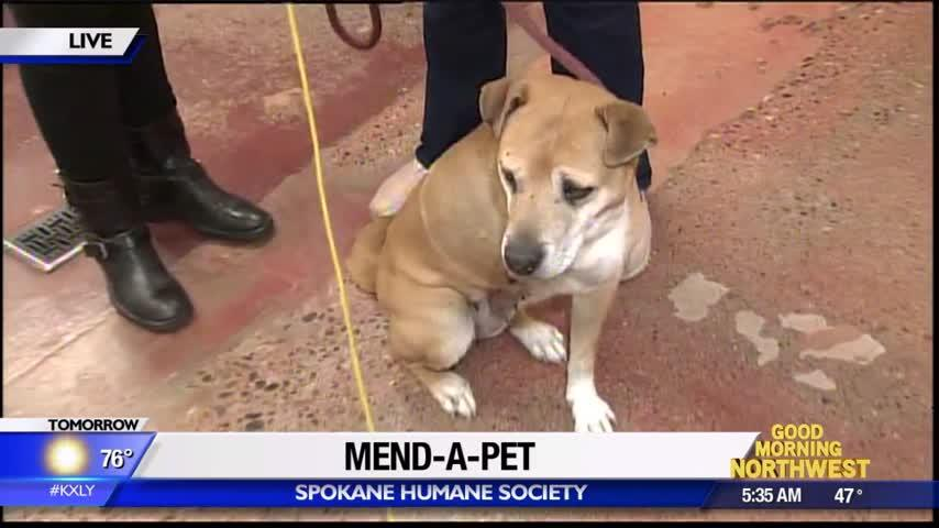Mend-a-Pet directly helps injured and sick animals at Spokane Humane Society
