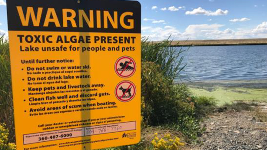 Health Alert:  Potentially deadly toxin found in Moses Lake