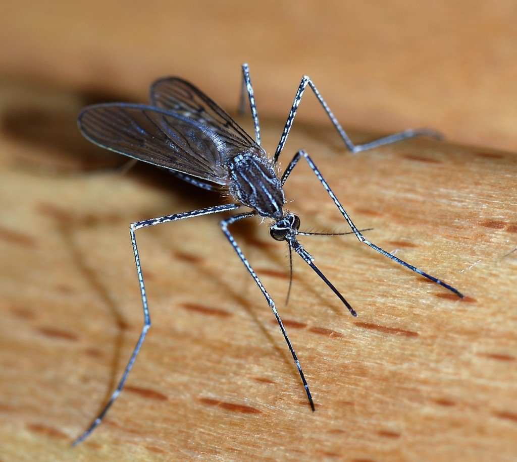 More West Nile Virus identified in Grant County