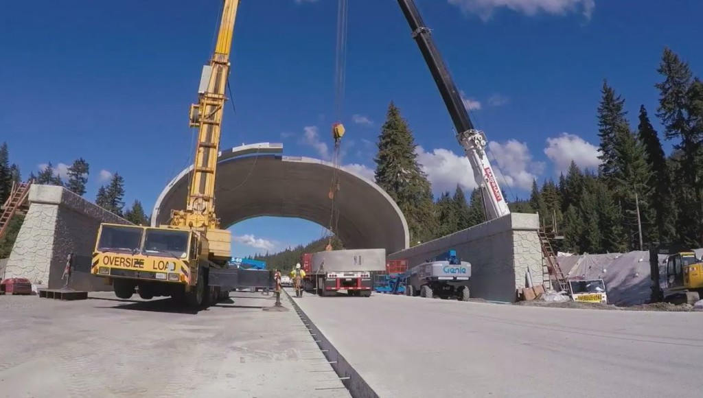 A billion dollar animal overpass on I-90