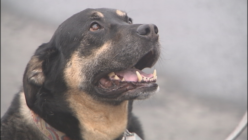 Bring your pooches for latest C.O.P.S. crime fighting venture