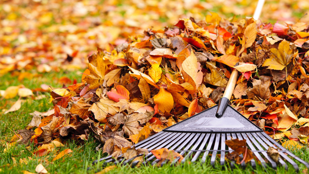 Leaf pickup starts Monday in Spokane