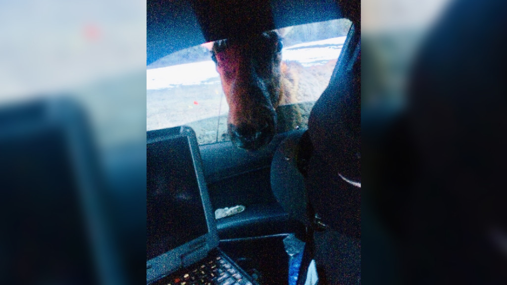 Elk give Idaho State Police trouble