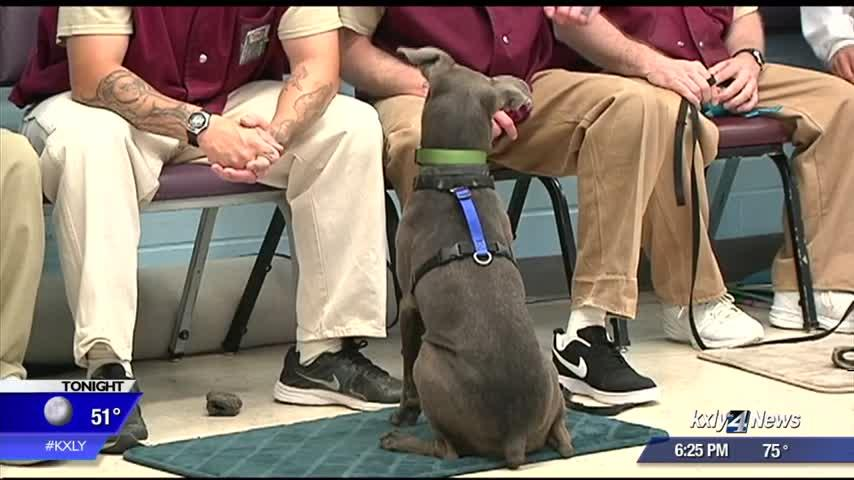 Prison program pairs dogs with offenders