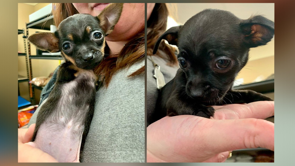 SCRAPS takes in abandoned puppies with rare physical condition