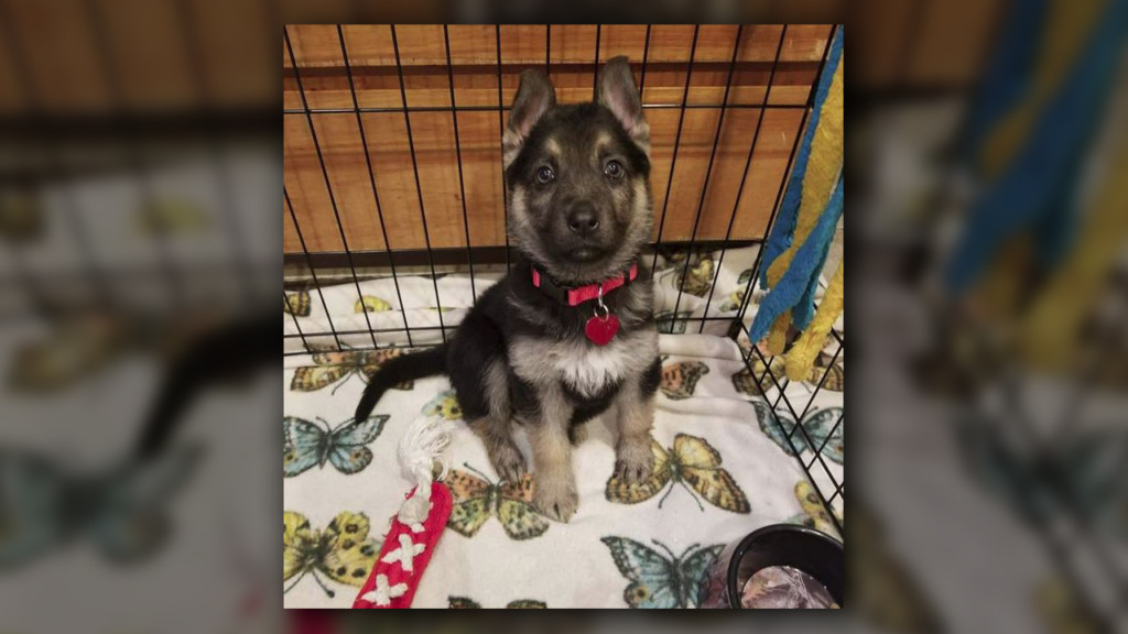 Washington county animal rescue creates bucket list for dying puppy
