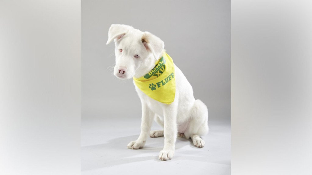Deaf, blind puppy from Spokane Valley wins Puppy Bowl MVP