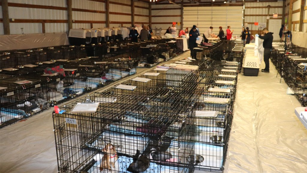 255 dogs seized in illegal breeding operations