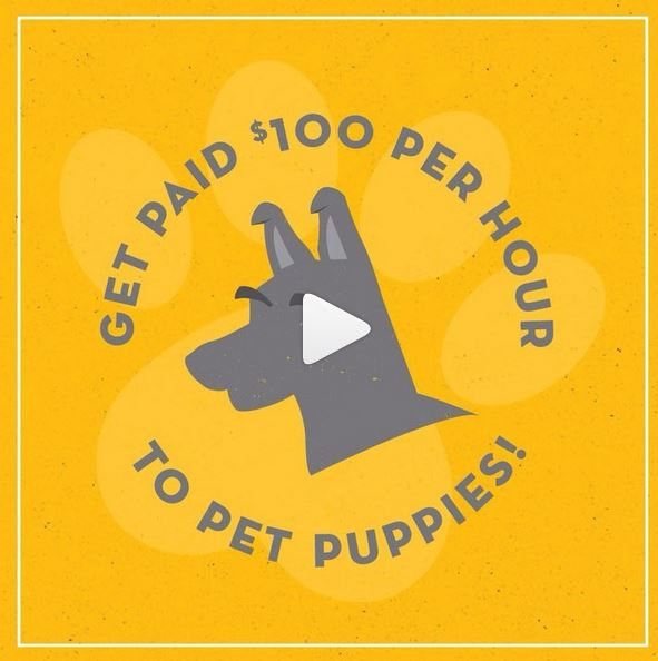 Get paid $100 an hour to pet puppies