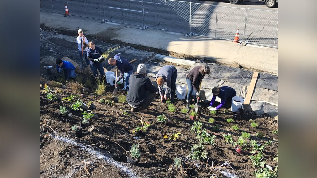 3,000 plants, 250 trees planted in downtown at 9th annual Reforest Spokane