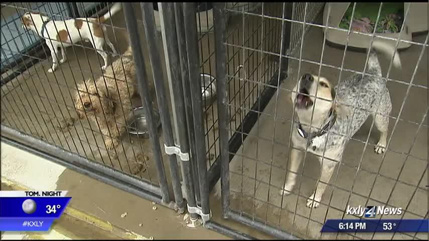 Residents threaten to shoot stray dogs if shelter can't take them, pet rescue says