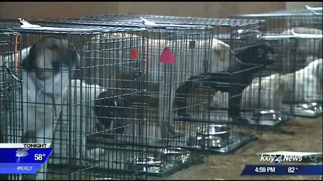 Roughly 40 dogs rescued from terrible conditions