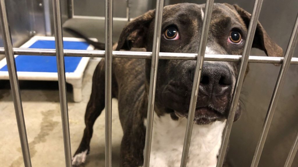 SCRAPS faces busiest day of year, holds pet adoption sale